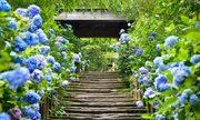 7 loài hoa thu hút khách du lịch ở Nhật Bản