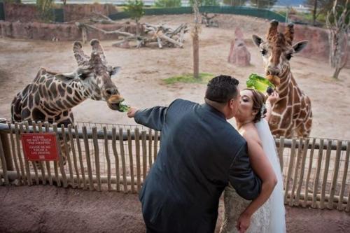 Vườn thú El Paso là điểm tổ chức đám cưới cho nhiều cặp đôi. Ảnh:WeddingWire.