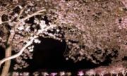Ngắm anh đào Nhật Bản cùng Vietravel, trải nghiệm shopping tại BicCamera