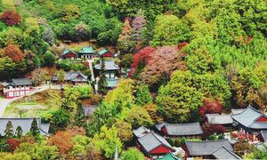 Vẻ đẹp thơ mộng dưới chân 'dãy Alps' của Hàn Quốc