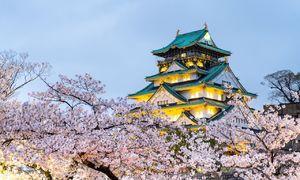 Nhật Bản, Hàn Quốc đẹp như cổ tích vào mùa hoa anh đào