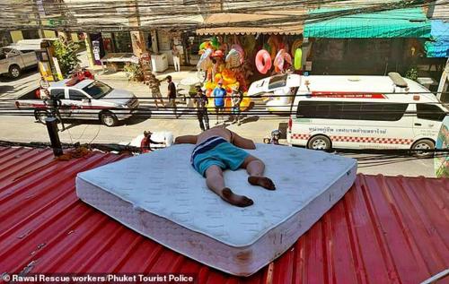 Meister ngủ trên mái tôn. Ảnh:Phuket Tourist Police.