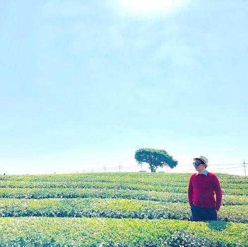 Tận hưởng không gian khoan khoái thanh mát và tinh khiết của hương trà xanh tại Osulloc Tea Museum.