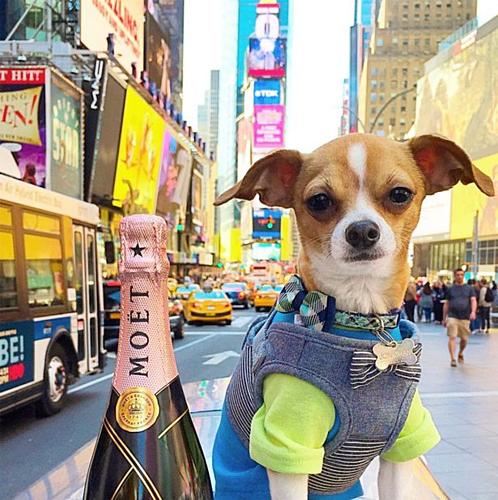 Con chó sướng nhất thế giới: thoát án tử, đi du lịch sang chảnh