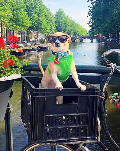 Con chó sướng nhất thế giới: thoát án tử, đi du lịch sang chảnh - 1