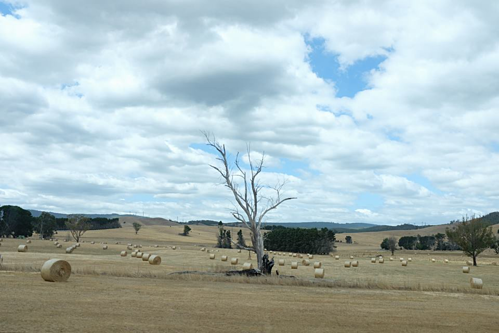 Thiên nhiên hoang dã của Australia, được anh Ngọc chụp trên đường từ Canberra đến Yarra Valley. Ảnh: NVCC.