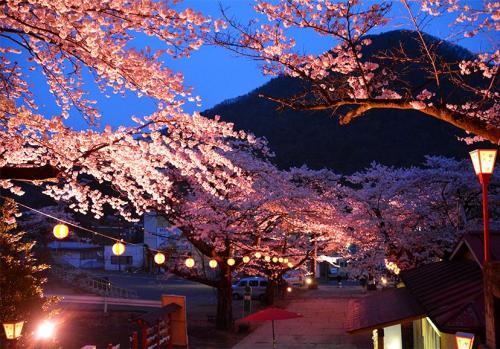 Kinugawa Onsen Yozakura Đêm xuống du khách còn có cơ hội chiêm ngưỡng một vẻ đẹp khác của hoa anh đào khi đi tản bộ trên những con đường với những cây hoa anh đào và những ánh đèn chạy dọc khu vực Kinugawa Onsen.Đến đây vào buổi tối, du khách sẽ được chiêm ngưỡng màn thắp sáng vô cùng tuyệt vời.