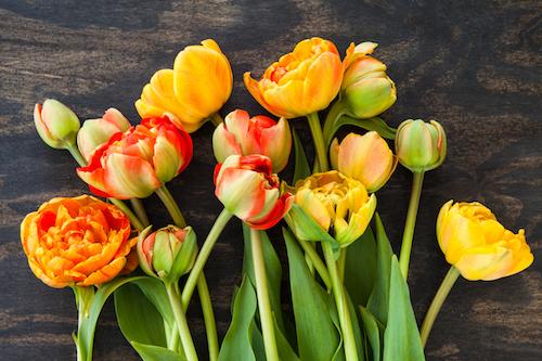 Tháng 5 là thời điểm diễn ra lễ hội hoa tulip ở châu Âu.