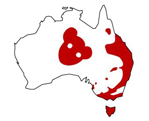 Bản đồ chỉ ra khu vực phân bố gấu nhảy trên trang web của bảo tàng Australia. Ảnh: Australian Museum.
