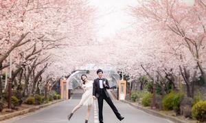 Những điểm ngắm hoa anh đào đầu mùa ở Hàn Quốc