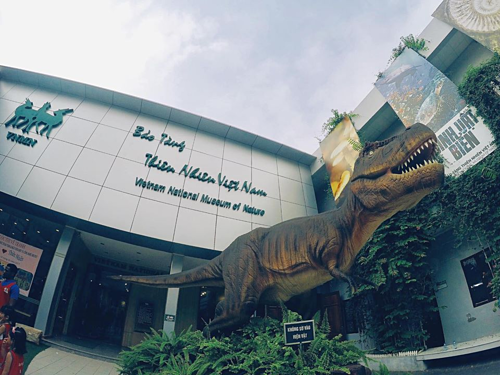 Khủng long khổng lồ là điểm nhấn thú vị đối với nhiều bạn nhỏ khi đến Bảo tàng Tự nhiên. Ảnh: NVCC.