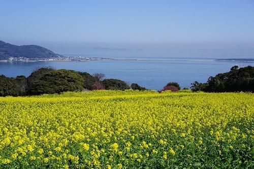 Nokonoshima Island Park là địa điểm tuyệt vời để chiêm ngưỡng mùa hoa. Ảnh: Vayapon.