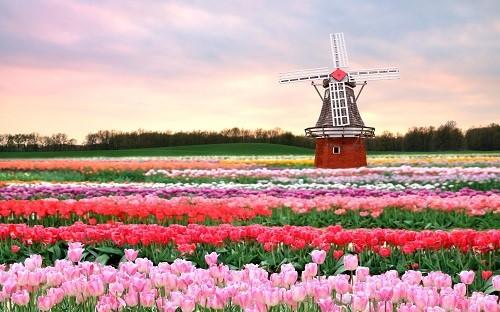 Những chiếc cối xay gió cổ kính hoặc những cô thôn nữ trong đôi guốc gỗ là những hình ảnh đặc trưng của đất nước Hà Lan, bên cạnh biểu tượng hoa tulip.