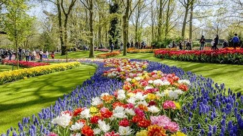 Công viên Keukenhof – nơi diễn ra lễ hội hoa tulip hằng năm.