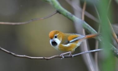 Hành trình săn ảnh chim trên vùng rừng núi Fansipan