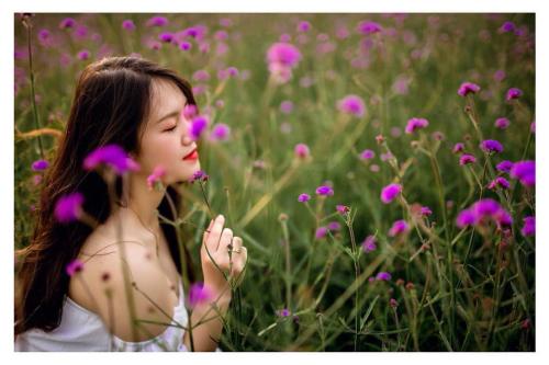 Như món quà dành cho khách phương xa, đúng kỳ nghỉ lễ cũng vừa lúc hoa bung rực rỡ cả đồi. Sắc tím dịu dàng và hương thơm nhẹ khiến bất cứ ai cũng cảm thấy thư thái, như thể đang dạo bước giữa một đồi hoa tím vùng Provence nước Pháp.