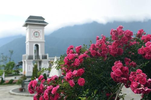 Cuối tháng 4 bước sang tháng 5, những ngày hè như dịu lại ở Fansipan bởi những đóa hồng cổ, hồng leo lớp lớp cánh mịn thơm dịu dàng trong gió. Lối đi trên đường ra quảng trường ga đi cáp treo Fansipan và khu vườn hồng tại chợ vùng cao đượm sắc hương của gần 300 gốc hồng cổ xen lẫn giữa hồng leo, hồng đỏ, tầm xuân, hồng vân khôi... rực rỡ.
