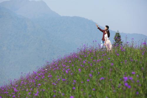 Đến Sa Pa mùa này, du khách sẽ bị hút hồn bởi cánh đồng hoa tím vừa trổ bông đầy mơ mộng tại khu vực ga đi cáp treo Fansipan. Trên triền đồi rộng 15.000 m2, hàng triệu bông hoa đua nở, tựa những đám mây tím bồng bềnh, lao xao trong gió núi, tạo nên một khung cảnh kỳ ảo chỉ có ở chốn bồng lai tiên cảnh.