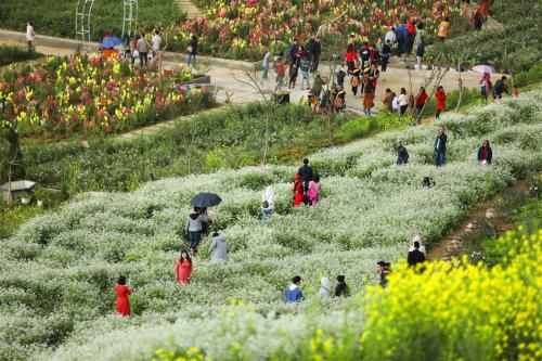 Gọi Fansipan là thiên đường hoa cũng không sai, bởi ai tới đây cũng không khỏi bâng khuâng xao xuyến trước không gian căng tràn nhựa sống của những cánh đồng hoa ngút tầm mắt. Nhưng Fansipan còn cho du khách nhiều trải nghiệm độc đáo hơn thế.