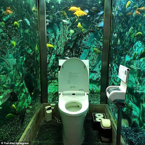 Nhiều thực khách đến quán chỉ để ngắm chiếc toilet được đặt dưới nước. Ảnh: Instagram.