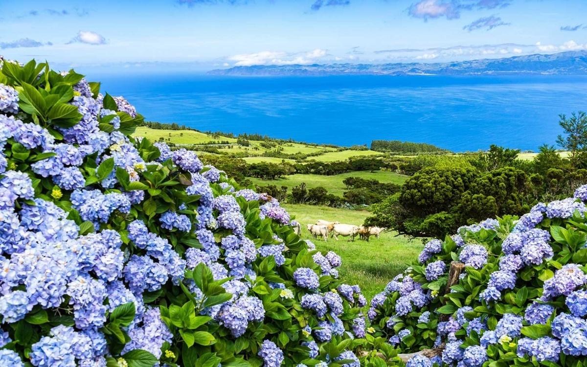 Image result for hoa cẩm tú cầu