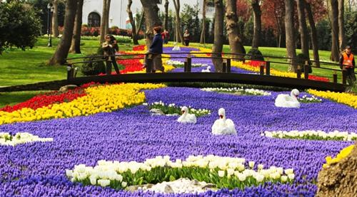Vì sao Tulip bắt nguồn từ Trung Á lại nổi tiếng ở Hà Lan?
