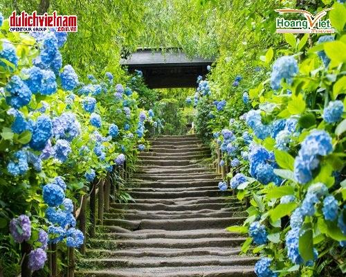 Mùa hè, tại Nhật Bản có nhiều loại hoa nở.