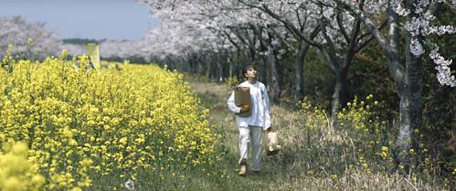 Jeju còn là thiên đường hoa với vô số loài hoa mang màu sắc rực rỡ. Những vườn hoa ở đảo Jeju chắc chắn sẽ làm khung hình bạn thêm thơ mộng. Gil Lê đang đắm say hạnh phúc trên cánh đồng hoa cải vàng rực. Ảnh chụp màn hình.