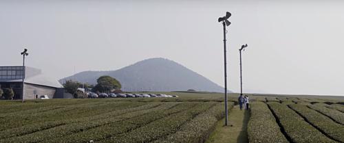 Khác Seoul luôn sôi động và tấp nập, đảo Jeju mang nếp sống thanh bình và yên ả với những cánh đồng trà xanh, vườn hoa, núi và biển. MV