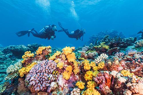 Porites là rạn san hô lâu đời nhất với 1.000 năm tuổi ở Great Barrier. Ảnh: Qantas.