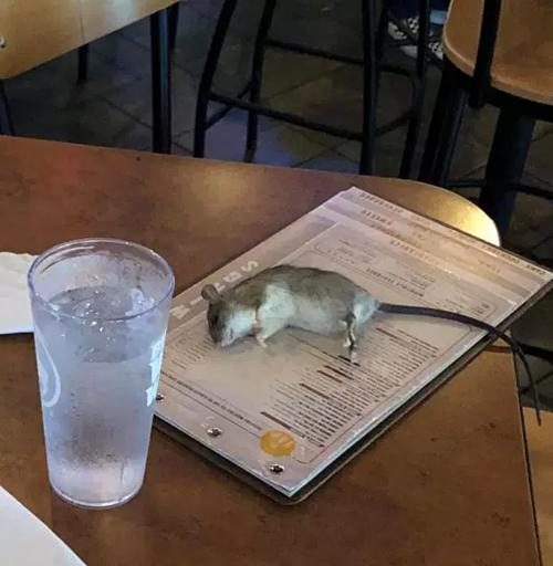 Con chuột rơi thẳng xuống quyển thực đơn Alisha đang xem để gọi món. Ảnh:Alisha Norman.