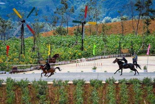 Những khoảnh khắc thú vị trong giải đua ngựa ở Fansipan - 1