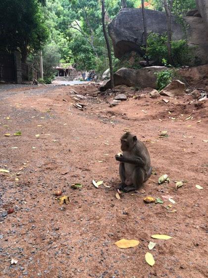 Trẻ nhỏ rất thích thú khi gặp bầy khỉ khi tới tham quan chùa. Ảnh: Phương Anh.