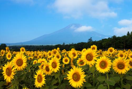 Vietravel ưu đãi cho tour thuê bao nguyên chuyến Đà Nẵng đi Nagoya - 1
