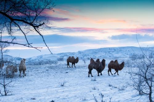Mùa đông Nội Mông thường kéo dài 5-6 tháng, nhiệt độ trung bình các tháng lạnh nhất dao động từ -16,1 đến -12,7 độ C. Thời tiết khắc nghiệt khiến cuộc sống ở đây ít nhiều bị thay đổi, do đó các hoạt động du lịch cũng trở nên hạn chế.