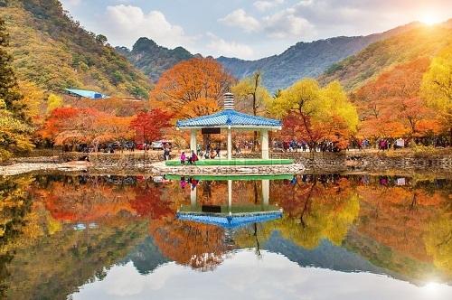 Công viên quốc gia Naejangsan có tổng cộng 919 loài thực vật và hơn 1.880 loài động vật. Ảnh: Colour Box.