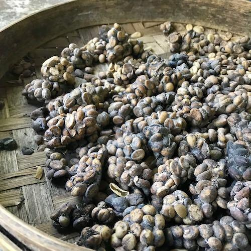 Cà phê luwak ở Bali. Ảnh:Phạm Huyền.