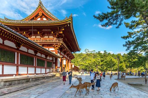 Du khách vui đùa cùng những chú hươu trong công viên Nara.