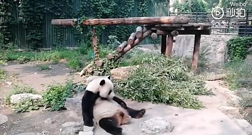 Video của du khách được đăng tải trên Weibo. Ảnh chụp màn hình video.