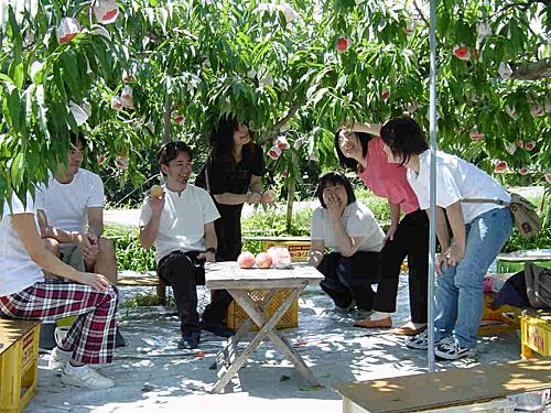Một trong những trải nghiệm nhất trong chuyến du lịch mùa hè là tham quan các vườn trái cây. Tỉnh Yamanashi nổi tiếng khắp cả nước với nhiều vườn cây tráiôn đới theo mua như: Tháng 4-5 là mùa thu hoạch cherry. Tháng 6-7 là mùa thu hoạch đào và táo và mùa nho sẽ từtháng 8 tới tháng 11. Ảnh: Nakagomi - Orchard.