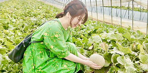 Vào khoảng giữa tháng 8 du khách có thể thưởng thức sự ngọt ngào từ dưa lưới vốn là sản phẩm nổi danh của quận Shizuoka tại Ibaraki. Ngoài dưa lưới du khách cũng nên thử những chiếc bánh làm từ dưa lưới với hương vị khá đặc biệt ngay tại vườn. Ảnh: Play Life.