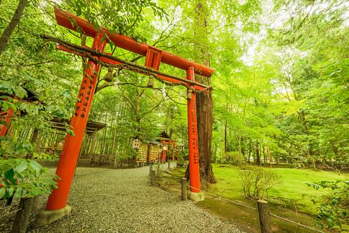 Nằm ở phía Tây của cố đô Kyoto, rừng tre Sagano là một trong những điểm du lịch nổi tiếng nhất Nhật Bản. Rừng tre Sagano, còn có tên là rừng treArashiyama,nổi tiếngtừ thời Heian (794-1185).Thời đó giới thương nhân quý tộc hay chọn khu rừng này là điểm nghỉ dưỡng yêu thích. Nơi đây được mệnh danh là rừng tre đẹp nhất thế giới. Ảnh: Travel Caffein.