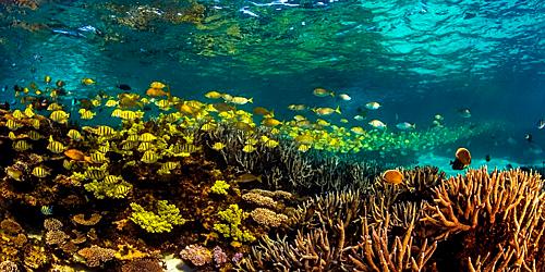 Rạn san hô Ningaloo dài khoảng 260km. Nơi đây có hơn 460 loài cá khác nhau và rất nhiều sinh vật đến kiếm ăn vào lúc hoàng hôn. Đây là nơi thích hợp với hoạt động lặn ngắm san hô dành cho khách du lịch đến Australia muốn khám phá đại dương. Ảnh: The Exmouth Visitor Centre.