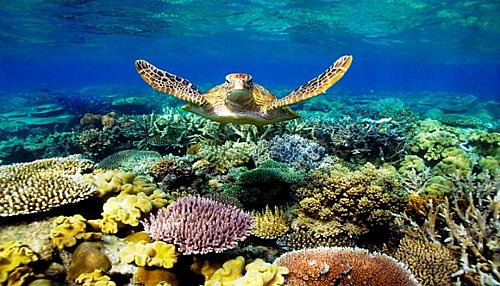 Rạn san hô Great Barrier, một trong Bảy kỳ quan Thiên nhiên của Thế giới. Với chiều dài là 2.000 km trong vùng nước ấm ngoài khơi bờ biển Bắc Queensland. Nơi đây còn nổi tiếng với các bãi cát trắng và các hòn đảo vắng vẻ chưa có sự tác động của  con người. Ảnh: Ipa.