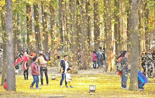 Ghé đảo Nami: Được hình thành do khi Hàn Quốc xây đập Cheongpyeong, Nami là hòn đảo hình bán nguyệt. Đảo cách Seoul khoảng một giờ xe ôtô, và nổi tiếng với những con đường rợp bóng cây xanh sẽ hóa thành thảm lá vàng thơ mộng vào mùa thu. Ảnh: Nami Island.