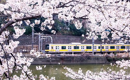 Joyful Train là tên gọi của những 19 chuyến tàu hạnh phúc với thiết kế và dịch vụ đặc biệt tại xứ sở hoa anh đào. Du khách nên thử loại hình di chuyển này bên cạnh các hoạt động tham quan nơi nổi tiếng hay mua sắm. Ảnh: JP Rail.