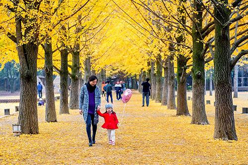 Các tour mùa thu đi Hàn Quốc, Nhật Bản, Đài Loan và châu Âu được nhiều du khách lựa chọn. Ảnh: KR Travel.