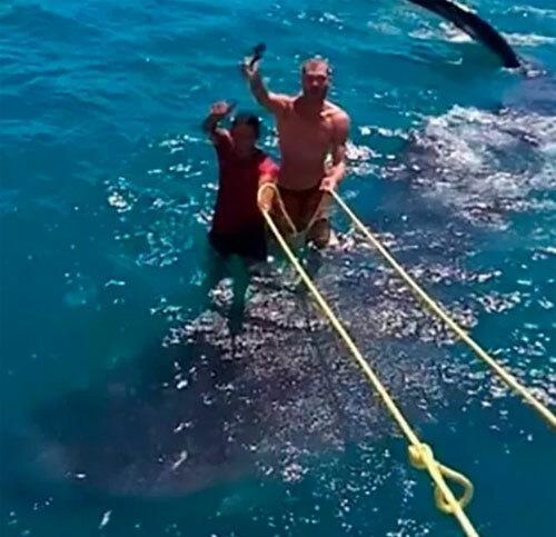 Hình ảnh bị nhiều người chỉ trích vì hai du khách đứng lên lưng một con cá mập. Ảnh: Sun.
