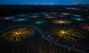 Cánh đồng ánh sáng rộng 100.000 m2 ở Hàn Quốc