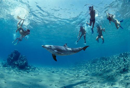 Nghiên cứu cho thấy hoạt động tương tác với cá heo mũi chai có thể phá vỡ hành vi tự nhiên của chúng như nghỉ ngơi và ăn uống, sự hiện diện của con người cũng có thể khiến chúng hoảng sợ và rời xa các hòn đảo. Ảnh: Cook Travel Write.